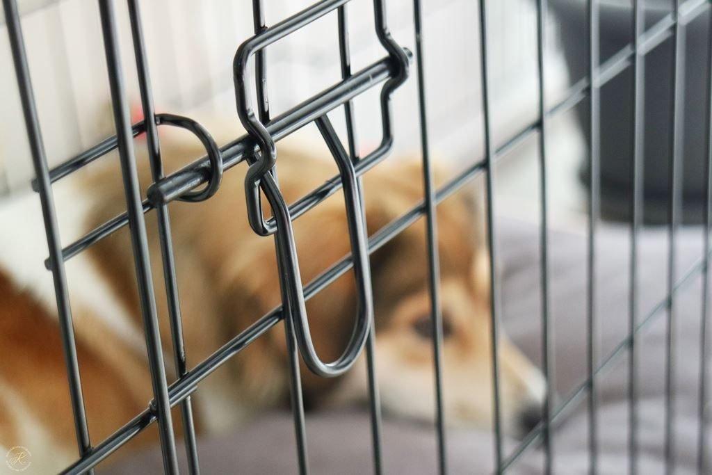 Kullakeks Fido Studio Hundebox Erfahrungen