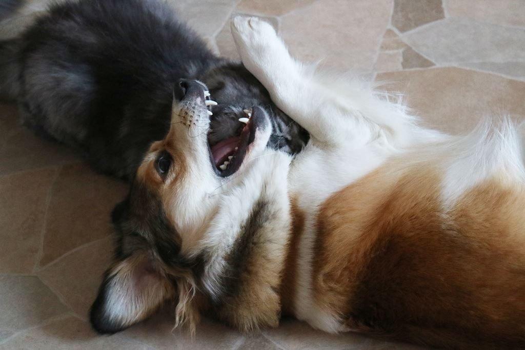 Freunde Hund und Katze