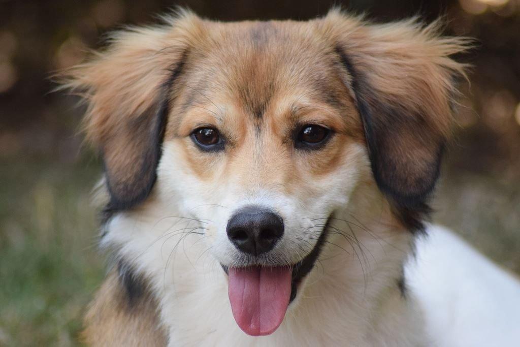 Kullakeks - auf den Hund gekommen - 1 Jahr Sammy