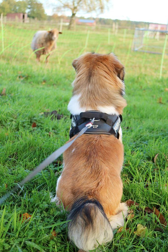 Kullakeks - auf den Hund gekommen - ein Jahr Sammy - Erfahrungen