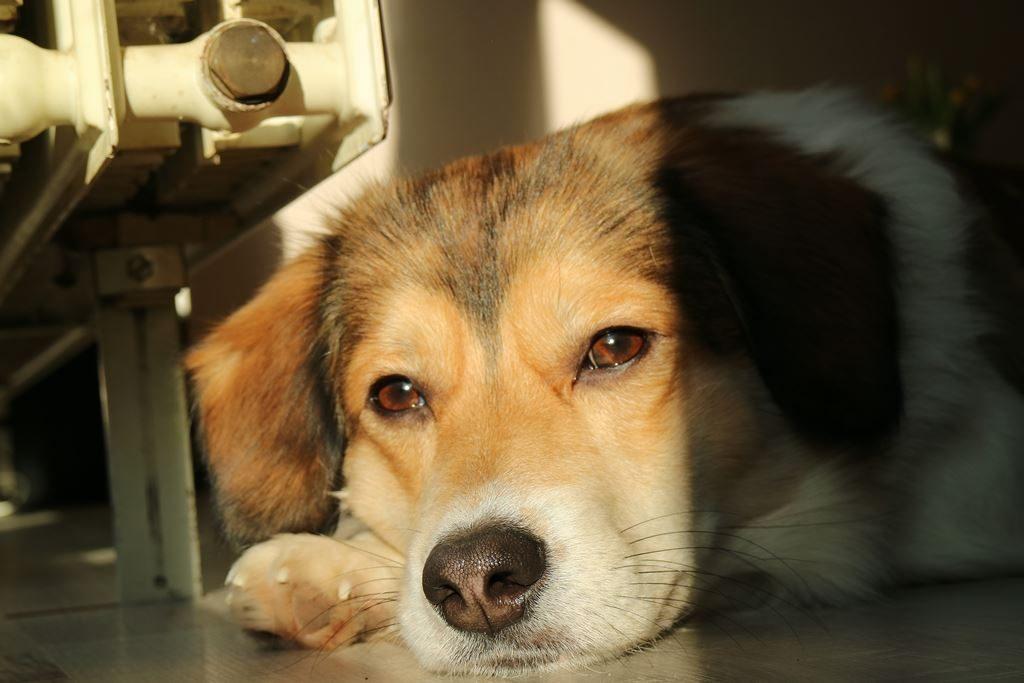 Liebe fürs Leben - Tierschutzunterricht für Schulkinder