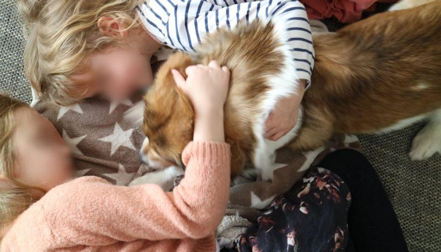 Liebe fürs Leben - Tierschutzunterricht für Schulkinder - Titelbild