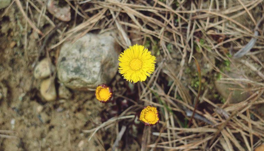 Kullakeks - Gedanken - Blume