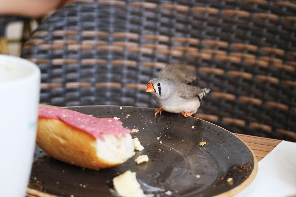 Kullakeks - Tropical Islands - Kurzurlaub - Frühstück - Vogel