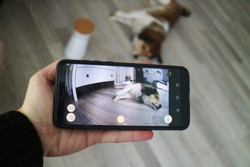Kullakeks - Furbo - Hundekamer - App - Handy