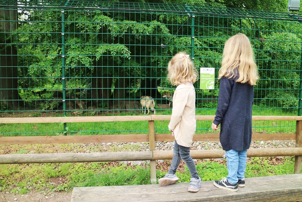 Kullakeks - Wisentgehege Springe - Rudeltage - Wölfe