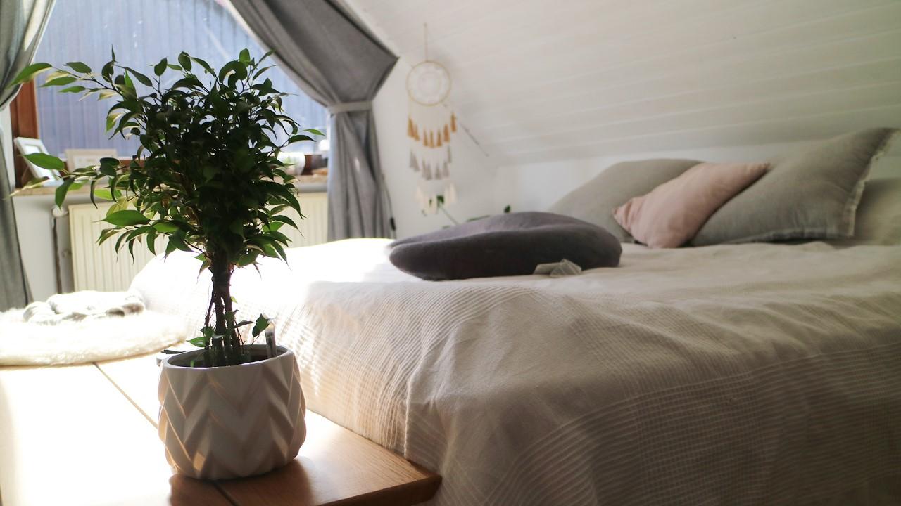 Kullakeks - Schlafzimmer - Detailaufnahme - Pflanze - Bett